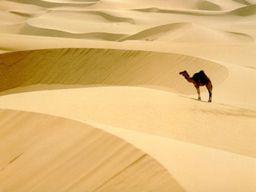camel-soul